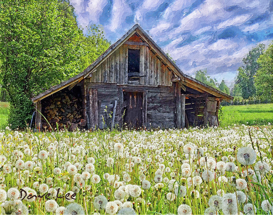 Dandelions Guarding The Barn by Dave Lee