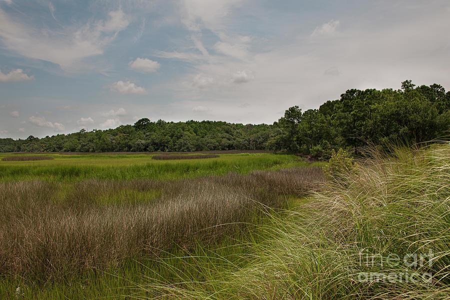 Daniel Island - Dry Marsh View Photograph