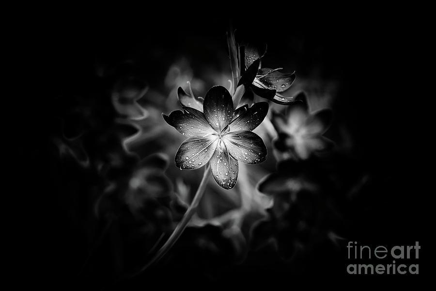 Dark Botanical Wildflowers Photograph