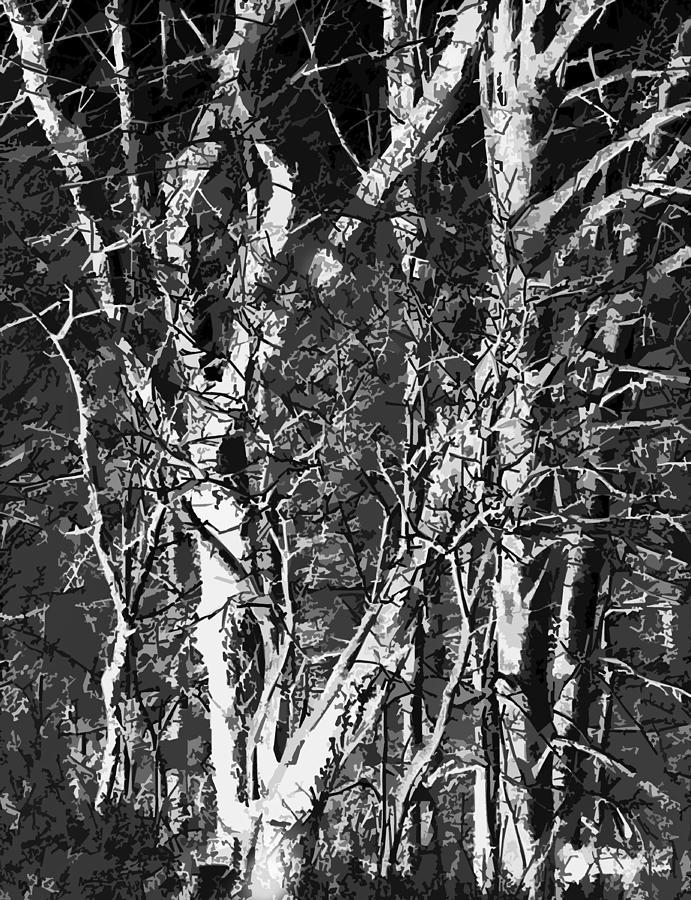 Dark Light Photograph by Ali Bailey