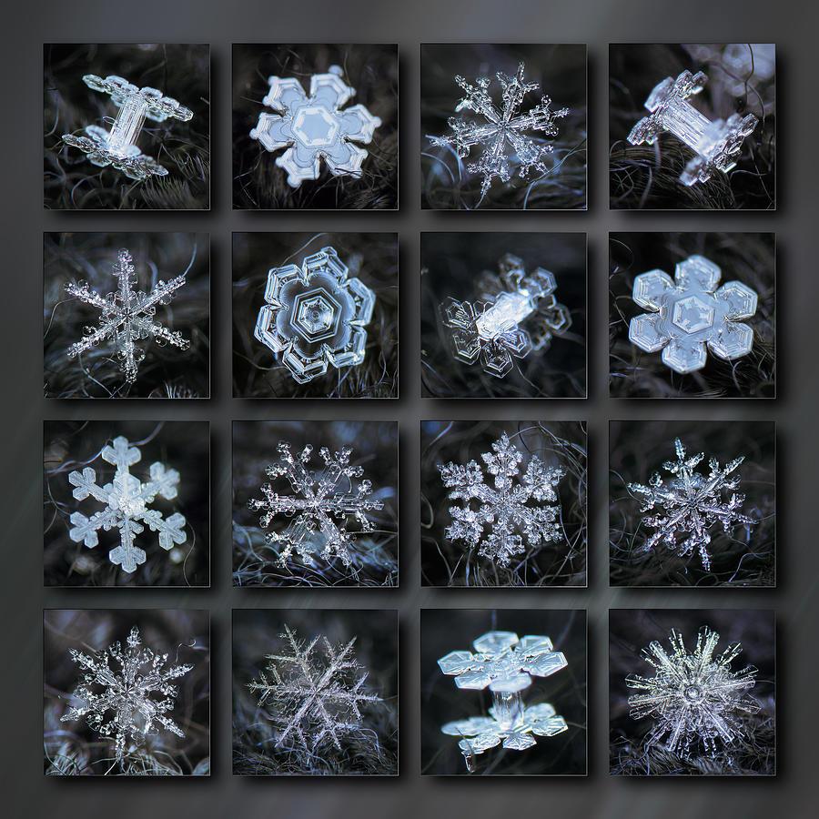 Dark Snowflake Collage - Winter 2020-21 Photograph