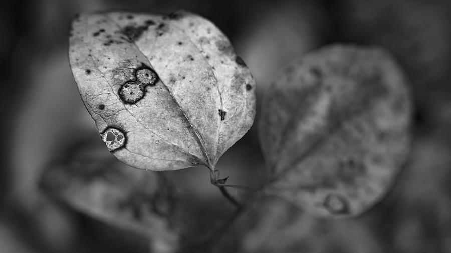 Darker Days by Patrick M Lynch