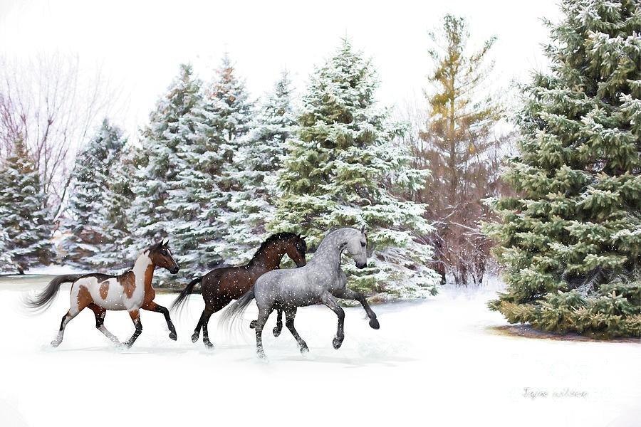Dashing Through the Snow by Jayne Wilson