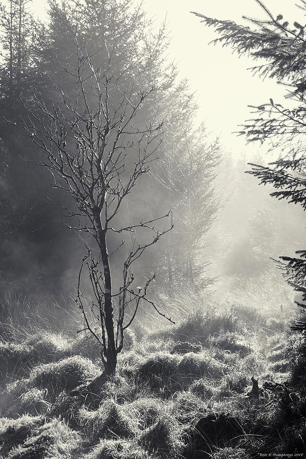 B W Photograph - Dawn Mist Clearing by Bear R Humphreys