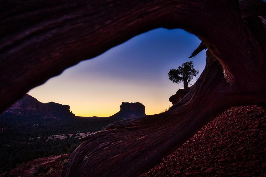 Dawn Through the Dead Tree - Sedona by Stuart Litoff