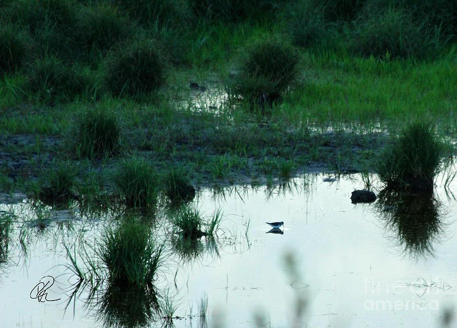 Daybreak Hunt by Ann E Robson