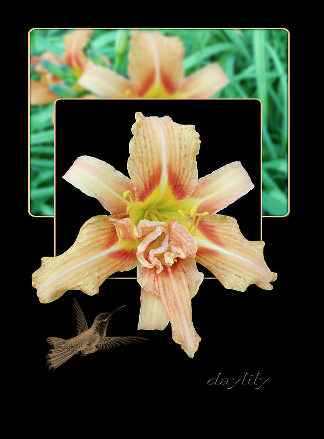 Daylily Hummingbird Vertical by Patti Deters