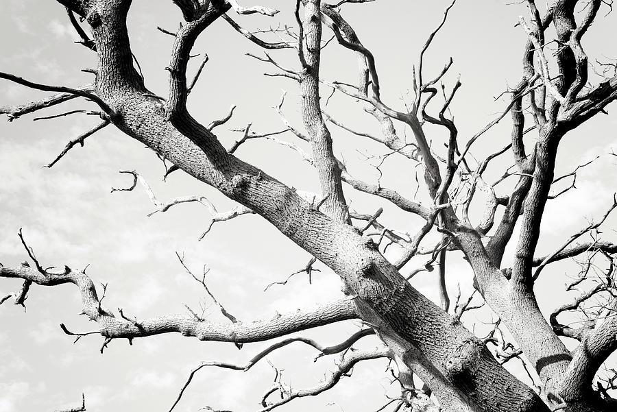 Dead Tree Branch by John Williams