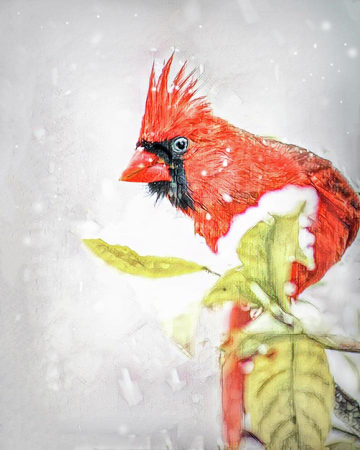 December Cardinal Photograph