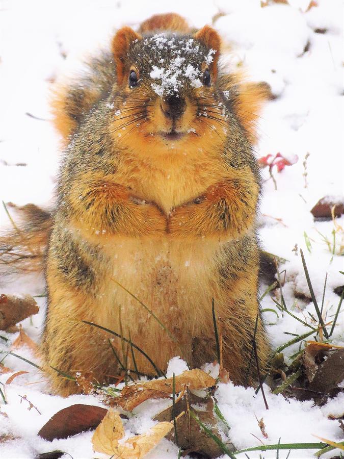 December Squirrel  by Lori Frisch