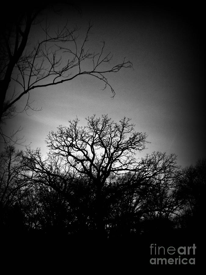 December Sunset Silhouette - Black And White Photograph