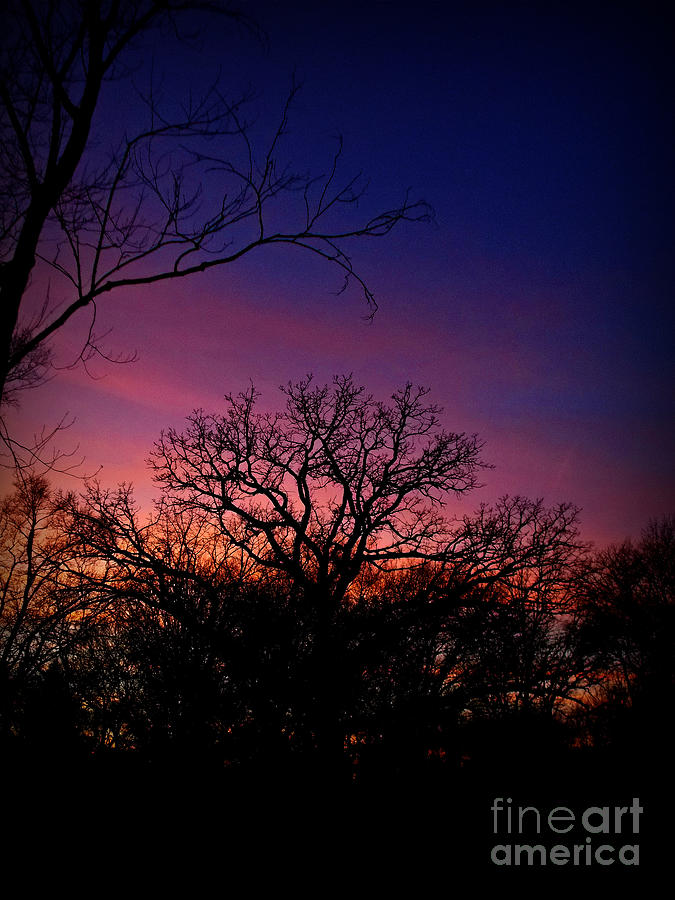 December Sunset Silhouette by Frank J Casella