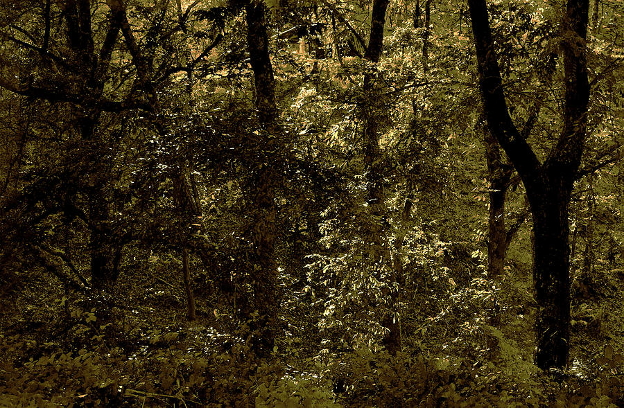 Gloss Digital Art - Deep Fall Forest by Mavicfe Victoria