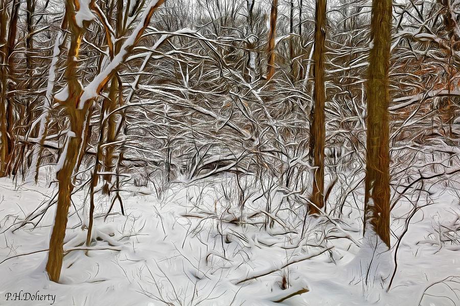 Deepinthecarolinianforest#2 Digital Art
