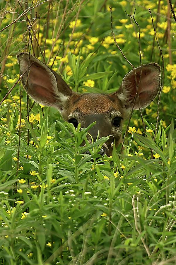 Deer Among Wildflowers Photograph