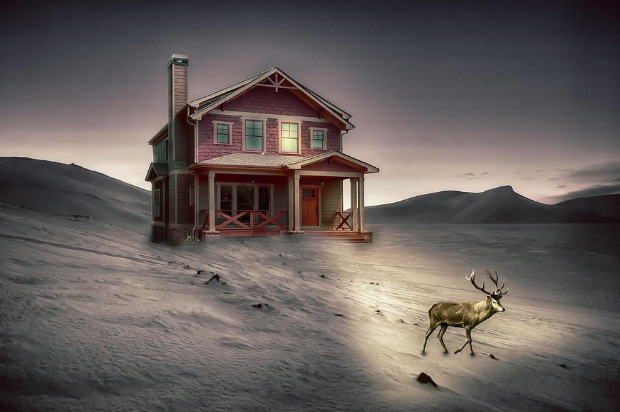 Deer in Front Yard by Alison Frank