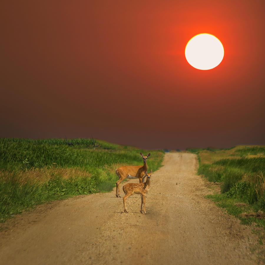 Deer Photograph - Deer Mama by Aaron J Groen