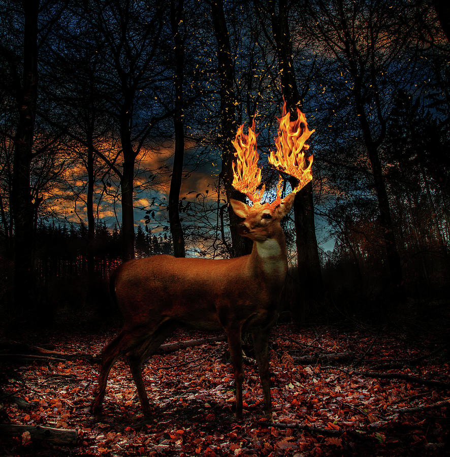 Deer On Fire Digital Art