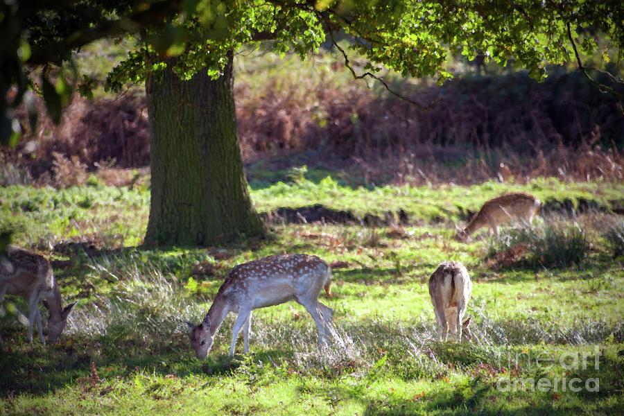 Deer Park Painting