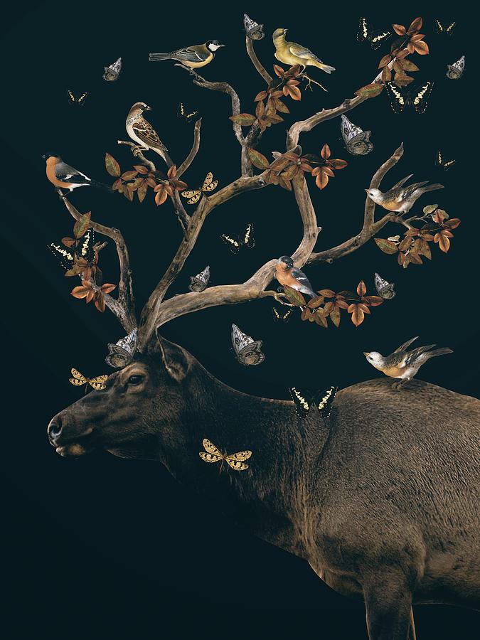 Deer With Birds And Butterflies Digital Art