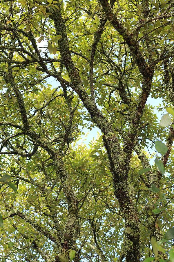 Delicate Cornish Leaves Photograph