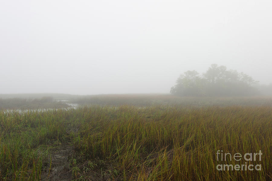 Fog Photograph - Dense Winter Fog - Lowcountry Marsh by Dale Powell