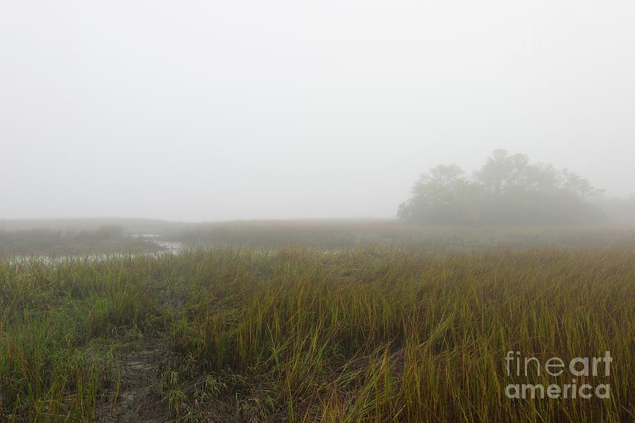 Dense Winter Fog - Lowcountry Marsh Photograph