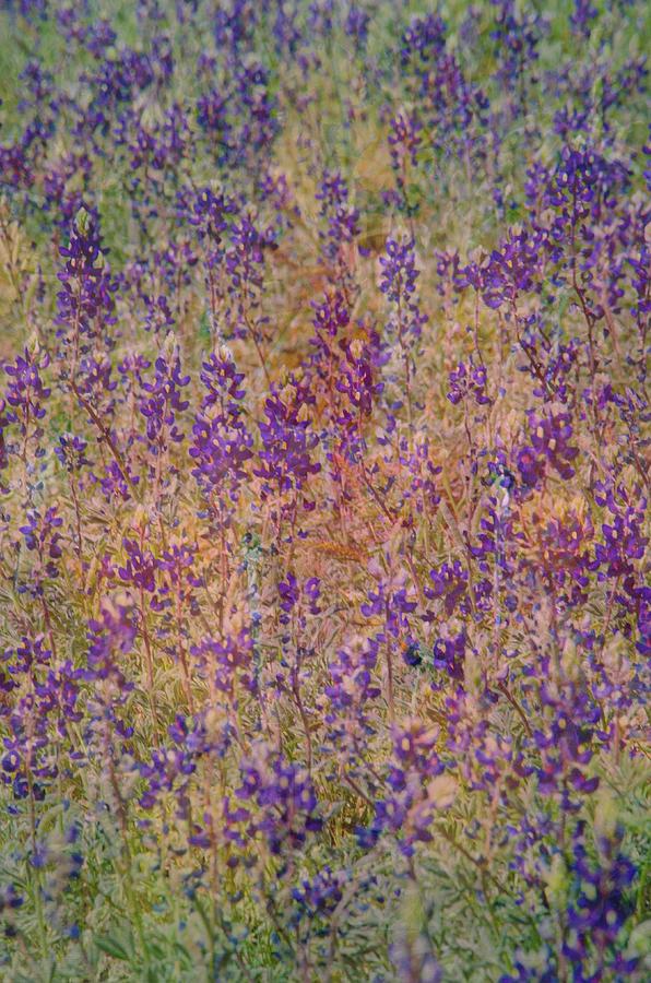 Desert Photograph - Desert Colors by Jim Cook