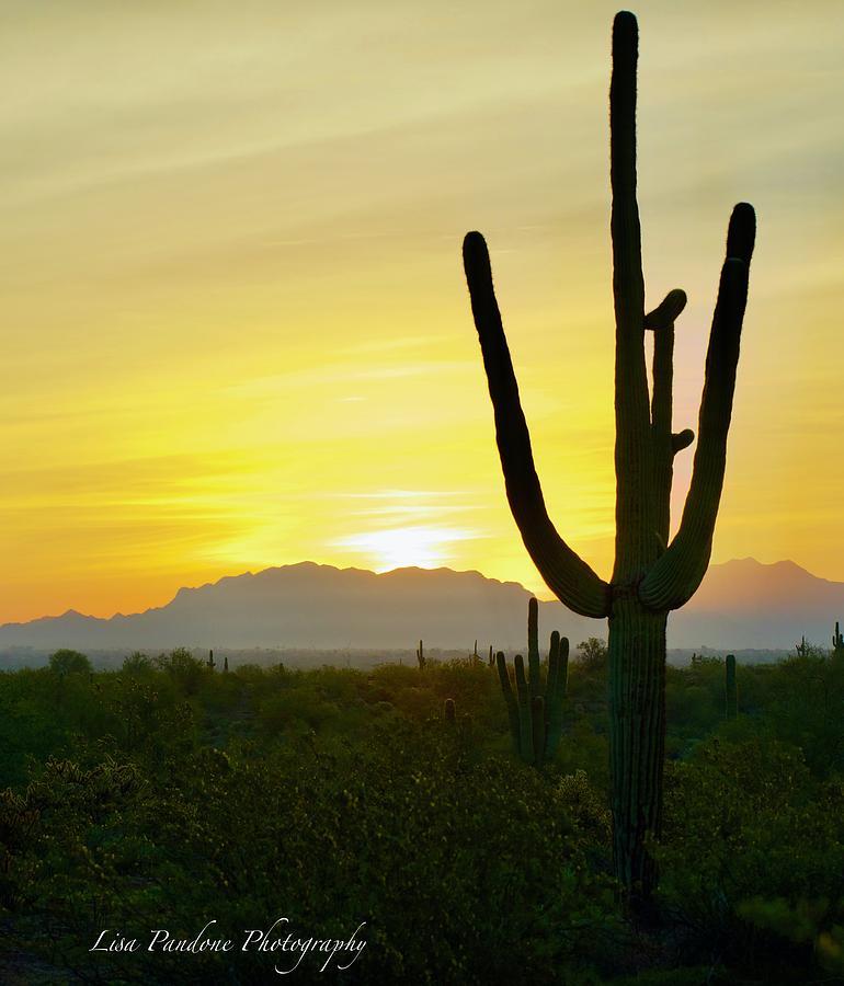 Desert Dawn by Lisa Pandone