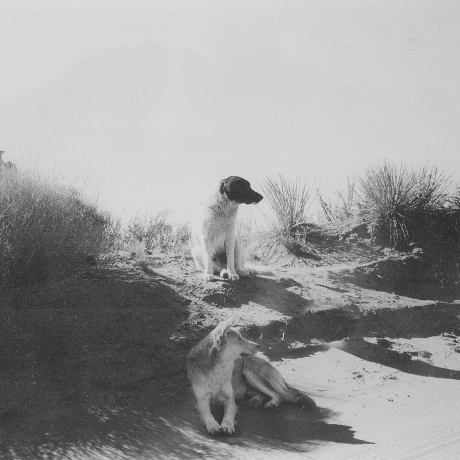 Mans Best Friend Photograph - Desert Dogs by Thomas Dans