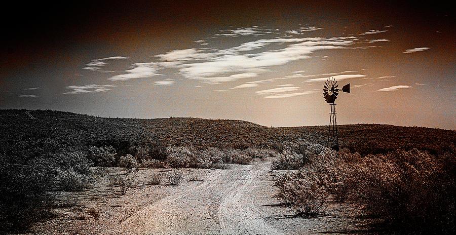Texas Photograph - Desert Guardian by Jim Cook
