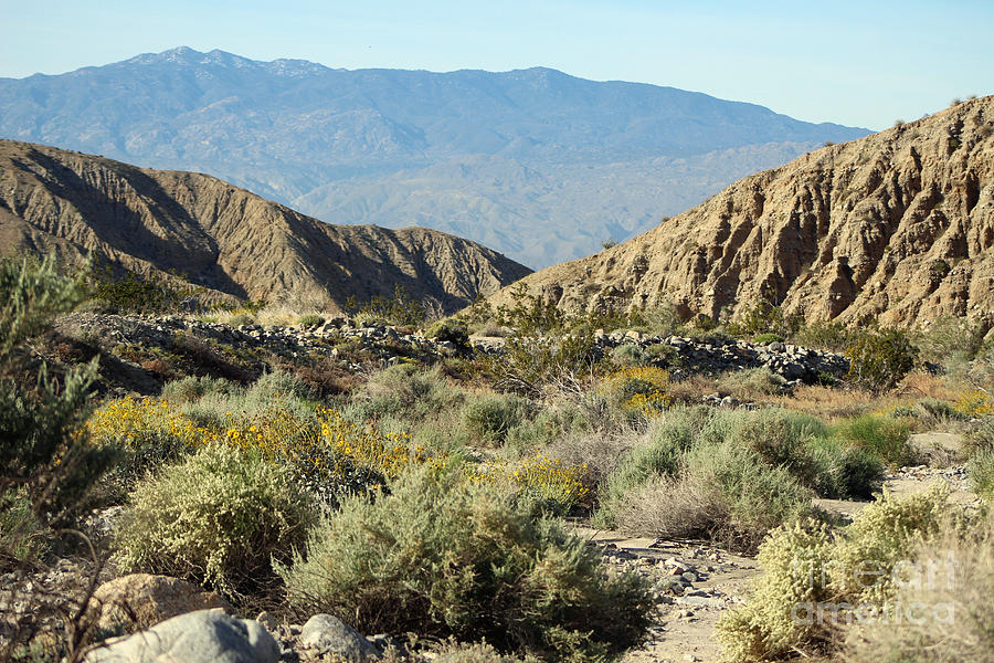 Pathway Photograph - Desert Scene 6 Coachella Valley Wildlife Preserve by Colleen Cornelius
