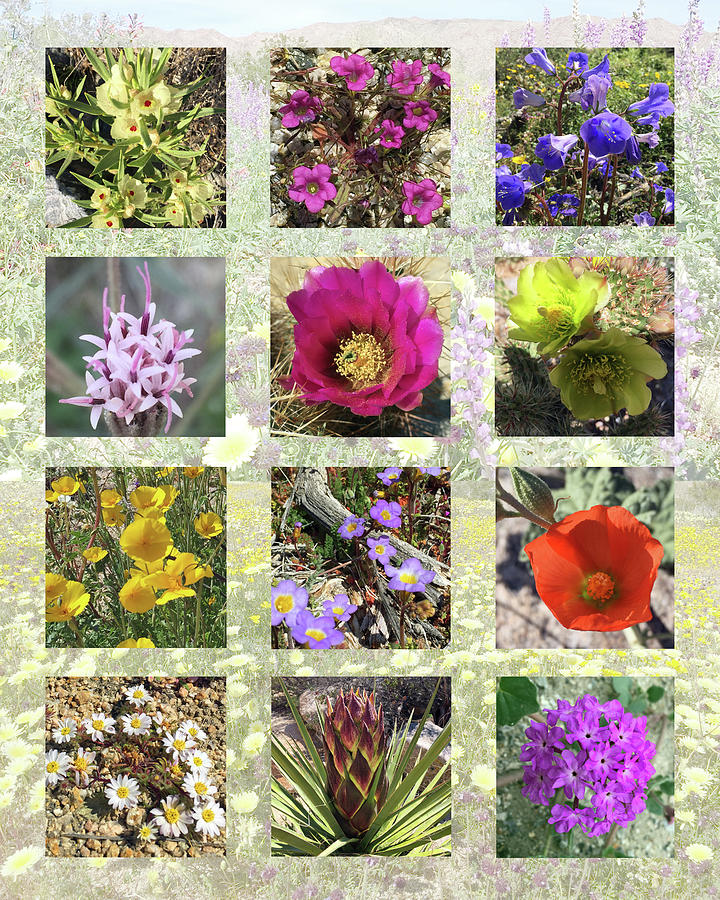 Wildflowers Photograph - Desert Wildflowers by Frick And Hammons