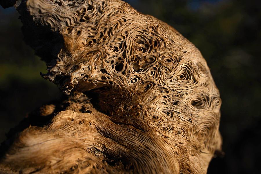 Nature Photograph - Desert Wizard by Kati Astraeir