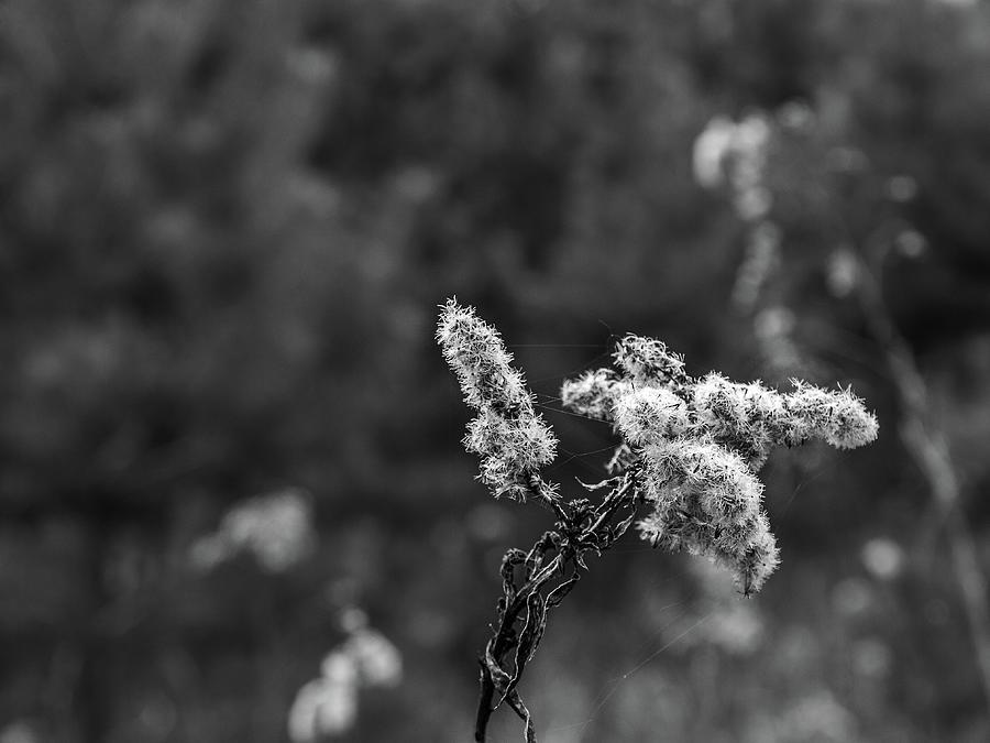 Detail Dry Flowers, Bokeh by Rostislav Bouda