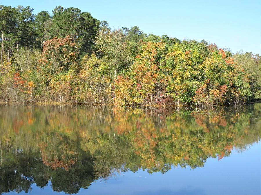 Deuce Forest Pond Shot Photograph