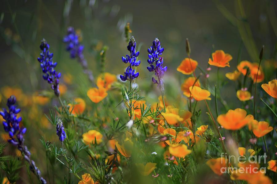 Diamond Valley Lake Wildflowers by Sam Antonio Photography