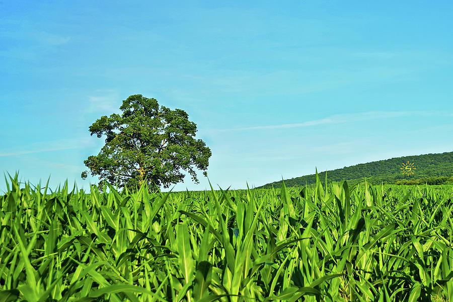 Dickinson Seasonal Tree - Summer Photograph by Staci Grimes