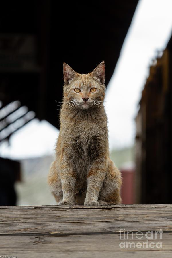 Dj The Railyard Cat Photograph