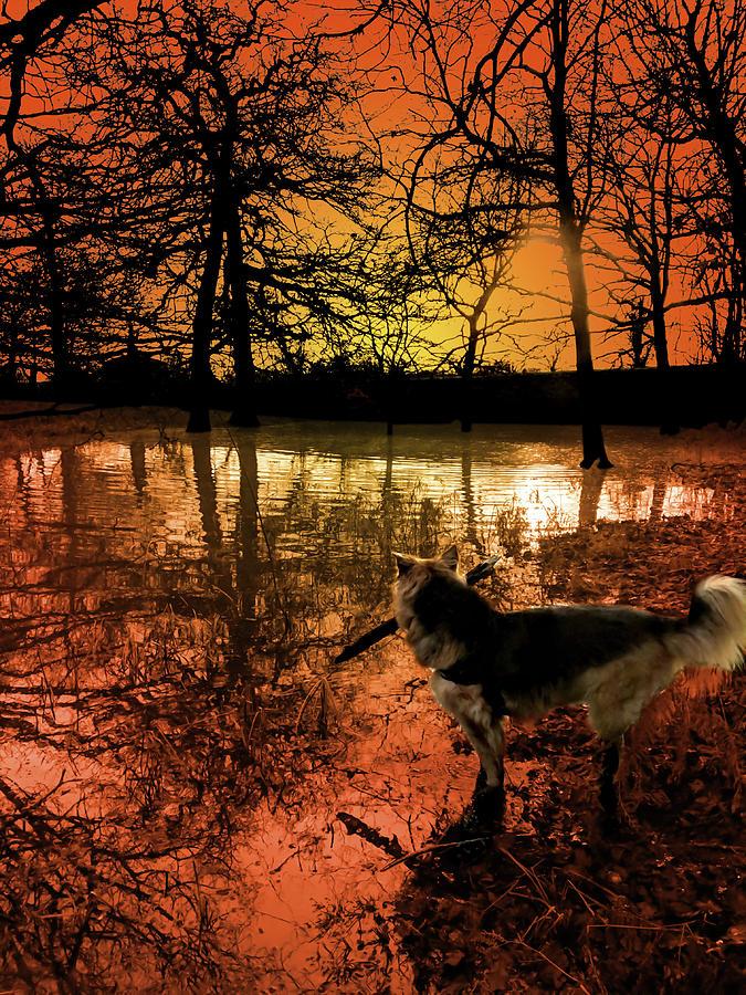 Dog And Dawn Digital Art