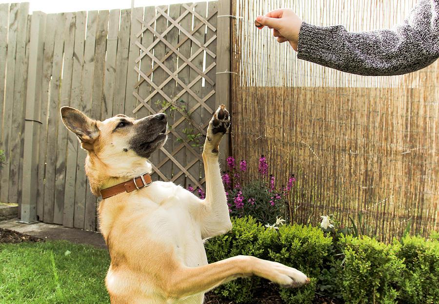 Dog asking for a snack Photograph by Kinga Krzeminska