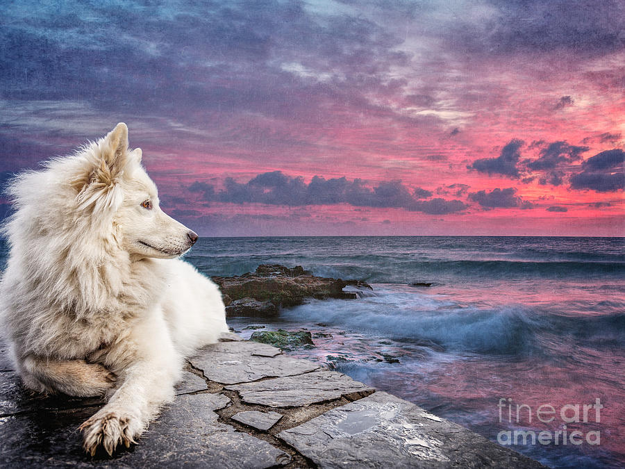 Dog At Sunset by Phil Perkins