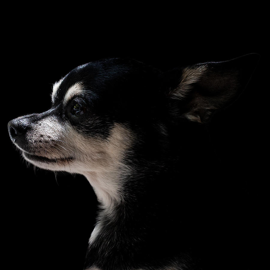 Dog Photograph - Dog In Profile #2 by Christine Buckley