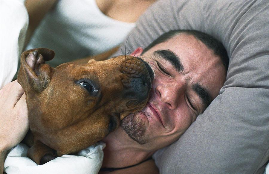 Dog licking sleeping mans smiling face Photograph by PhotoAlto/Katarina Sundelin