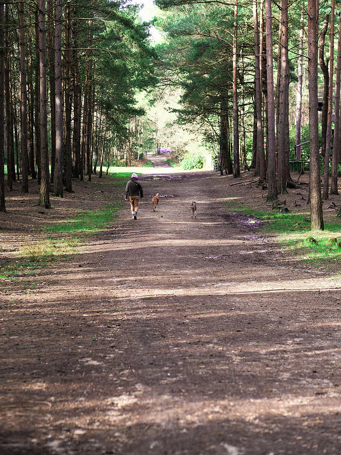 Dog Walking In The Forest Photograph