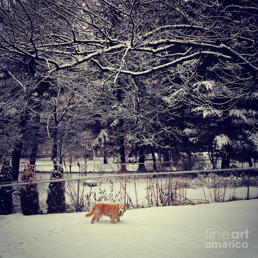 Dog Photograph - Dog Walking Under the Snowy Trees by Frank J Casella