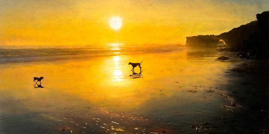 Dogs Frolicking On The Beach Photograph