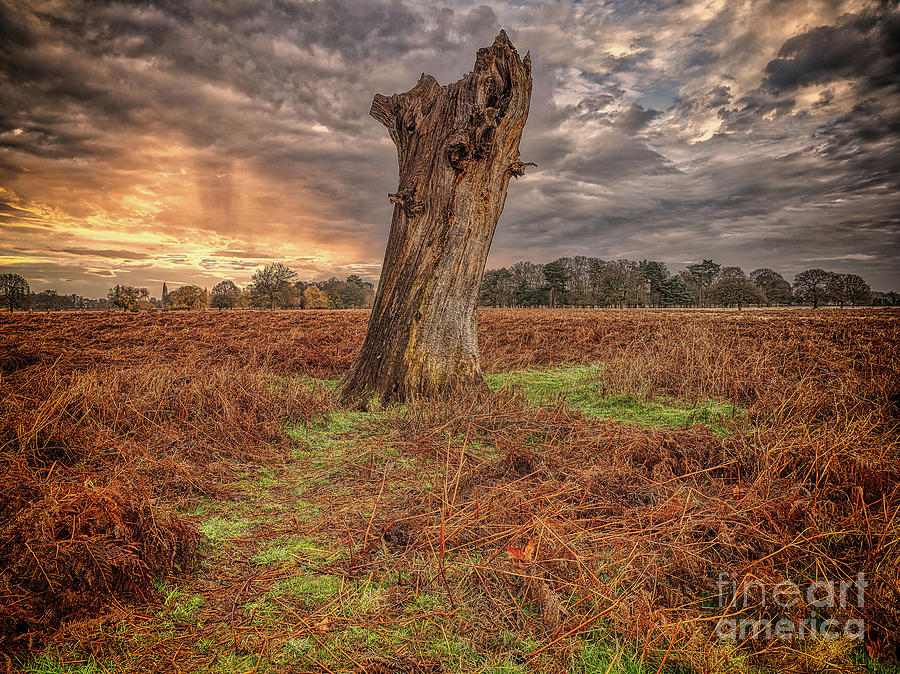 Bushy Park Photograph - Doing My Own Thing by Leigh Kemp