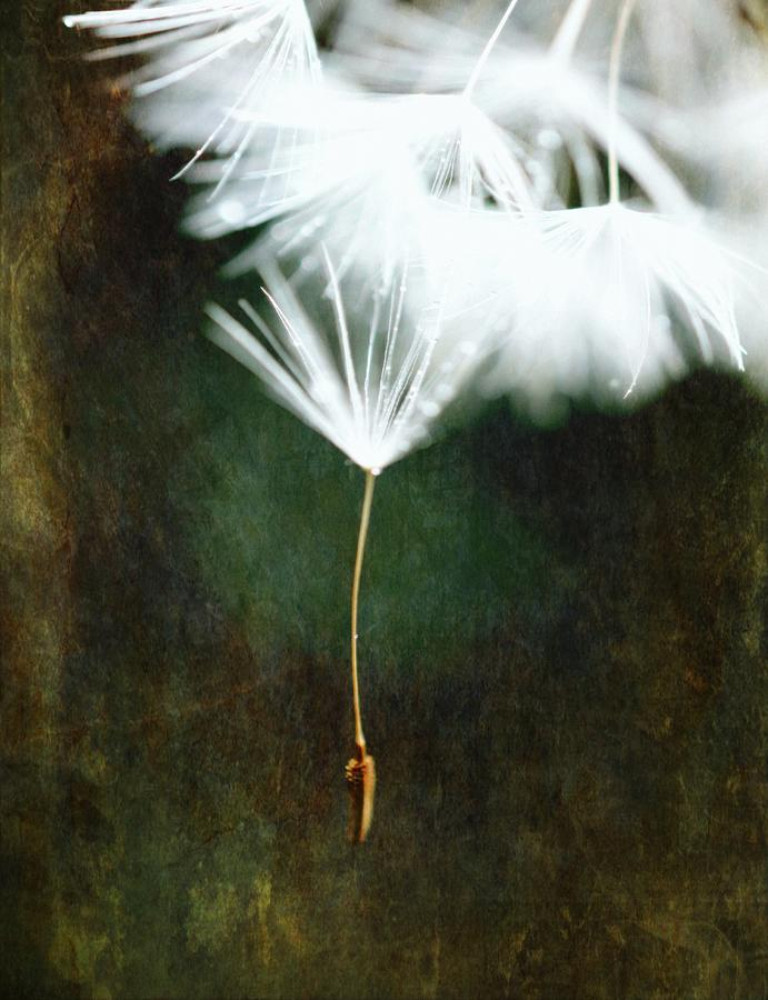 Don't let me fall - Dandelion Art #2 by Marianna Mills