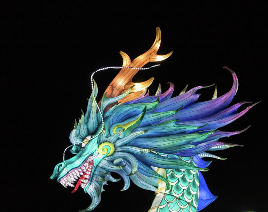 Dragon by Martin Newman